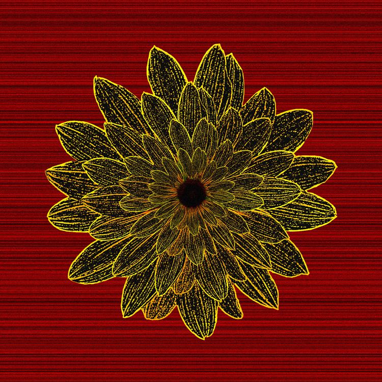 Sunflower_Star