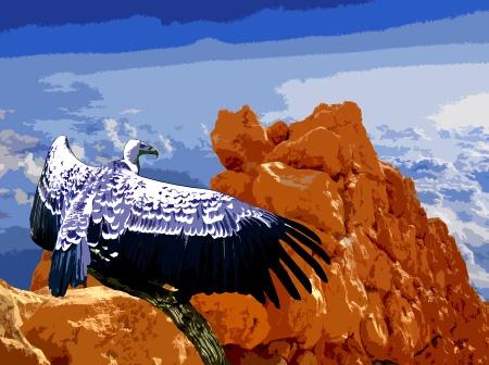Vulture Spirit Guide
