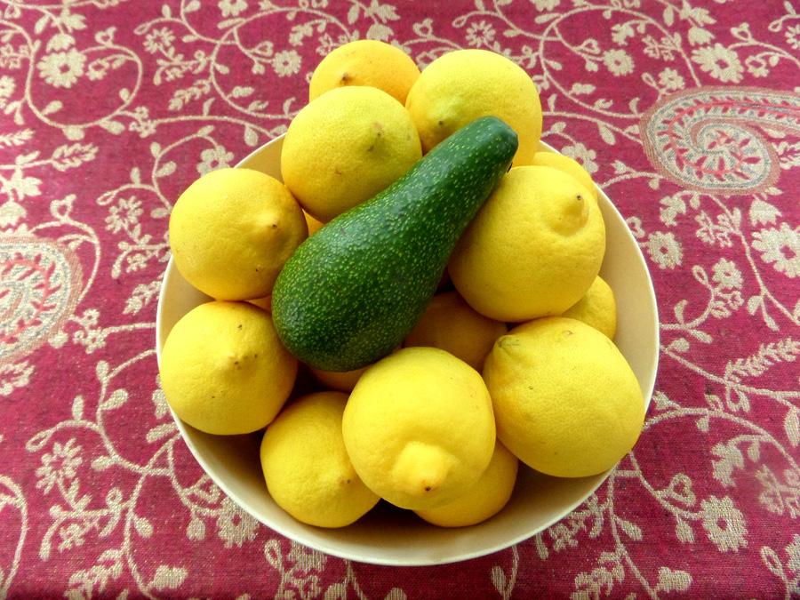 Juxtaposition 1 - Avocado & Lemons