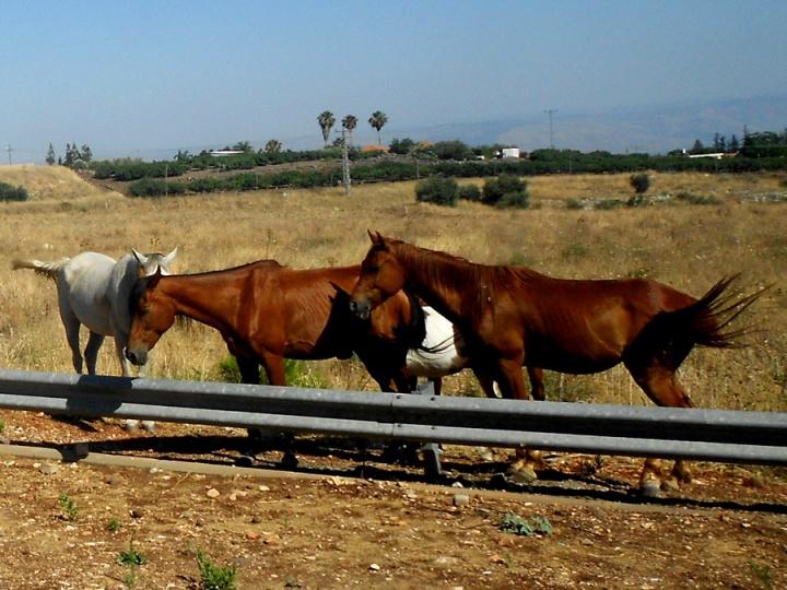Roadside Horses