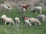 ... grazing together ...