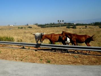 The Horses
